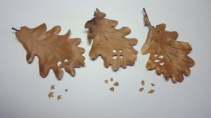 Leaf punches example